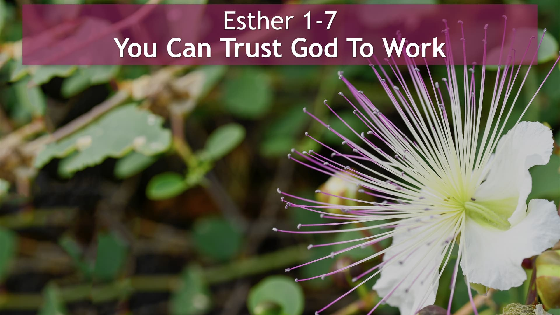 Esther 1-7, You Can Trust God To Work